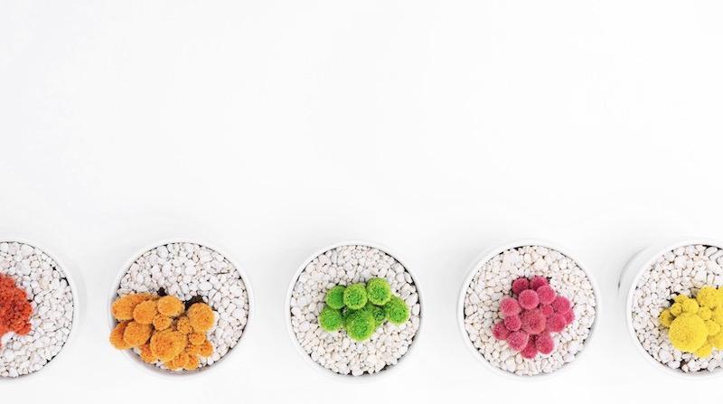 Creative Minimalist Plant Simple Background Image