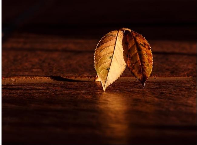 Orange Leaf Flyer Background Image