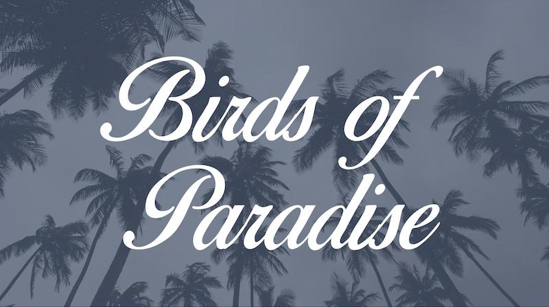 Free Elegant Fonts - Birds Of Paradise