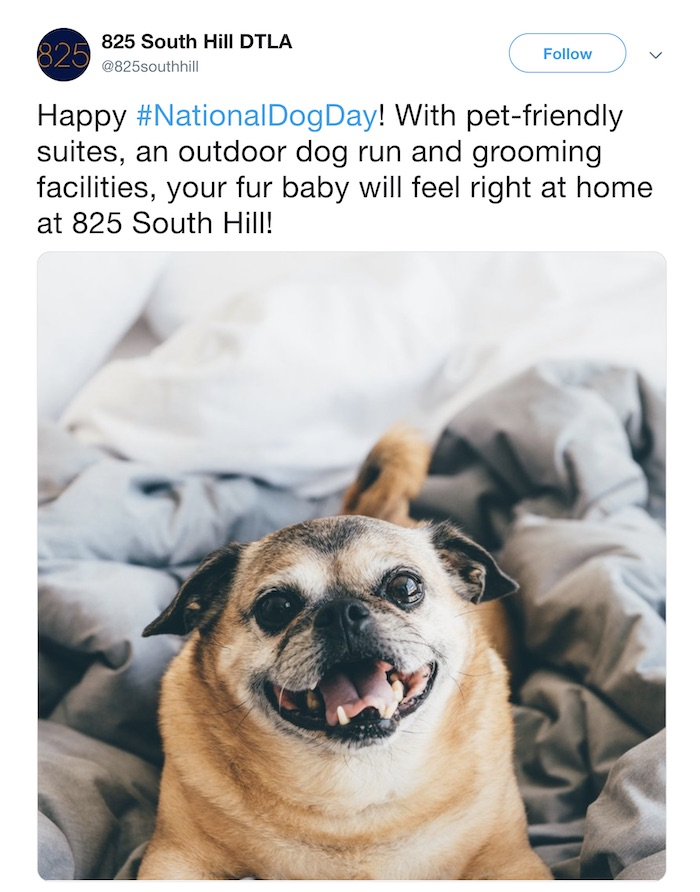 National Dog Day - Social Media Holiday Templates1