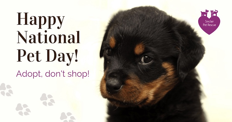 National Pet Day Social Media Holiday Templates3