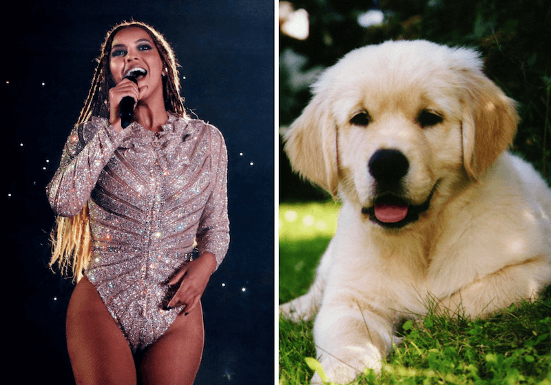 Beyonce and a golden retriever puppy