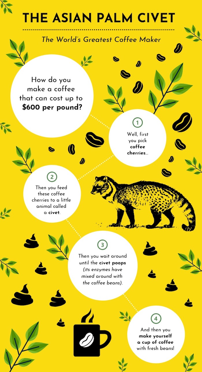 Bizarre Animal Facts Process Infographic Template