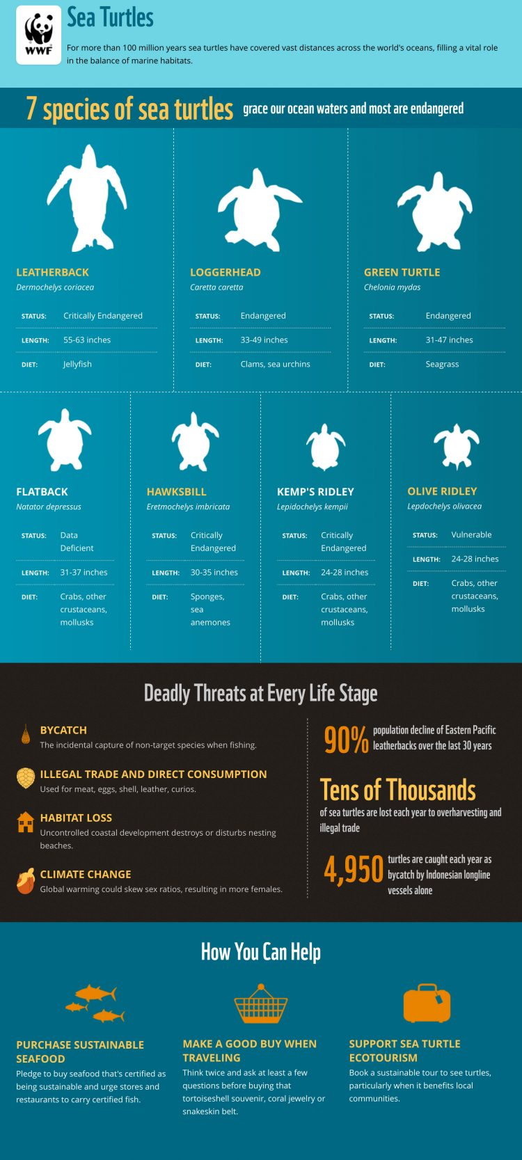 Nonprofit Storytelling Example Sea Turtles