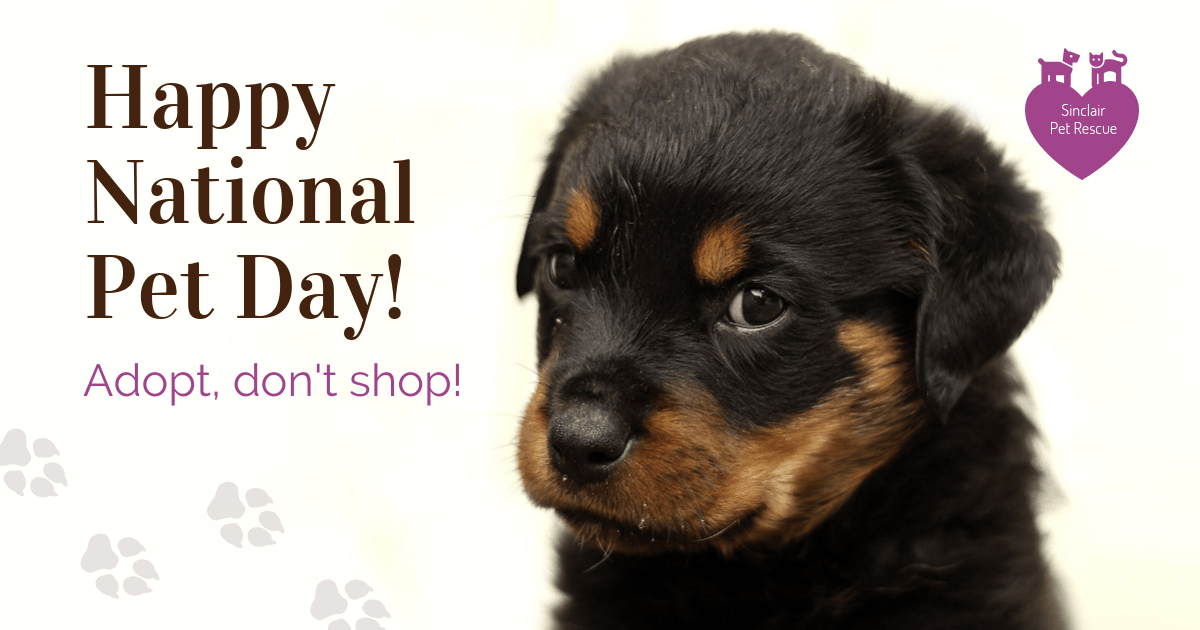 National Pet Day Facebook Post Template