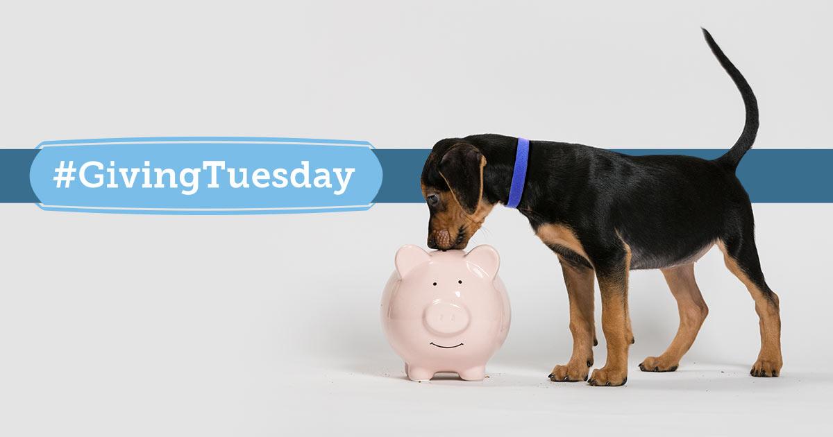 ASPCA Giving Tuesday-Live-athon