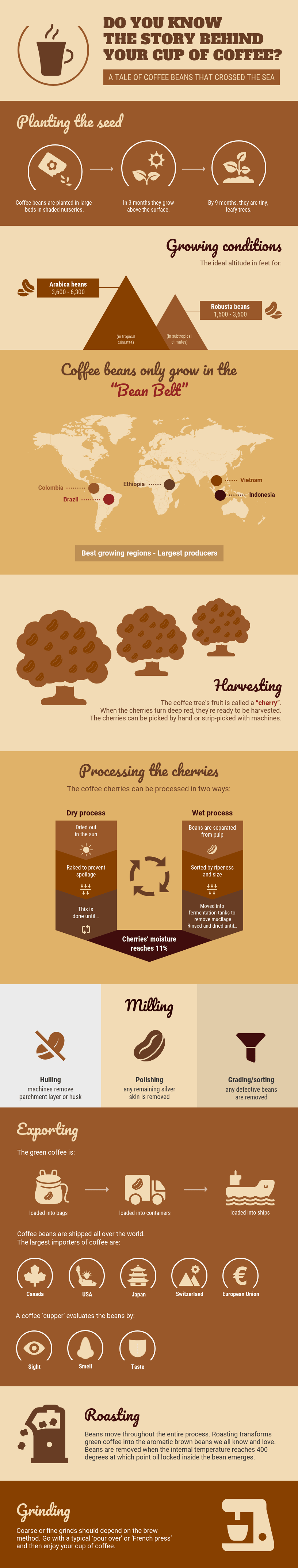 Infographic fonts coffee infographic template