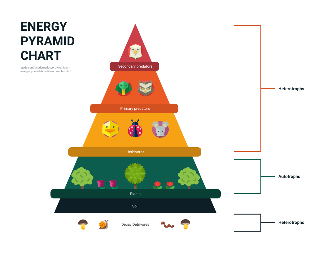 Pyramid Chart Template Illustrative Nature Infographic